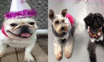 Dog Sense Daycare - Birthday