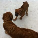 Dog Sense Daycare