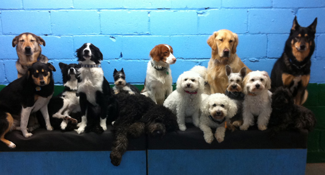 Dog Sense Daycare - About Us
