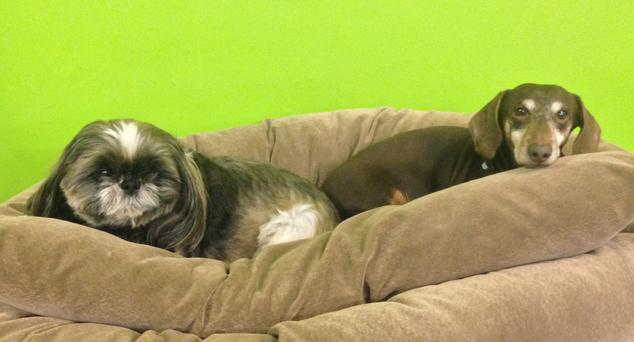 Dog Sense Daycare - Boarding