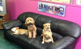 Dog Sense Daycare - Care-free Dog Boarding