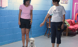 Dog Sense Daycare - Dog Training