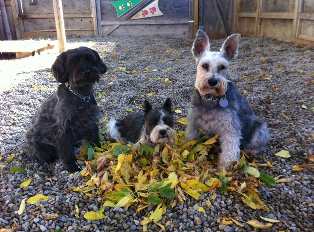 Dog Sense Daycare - new classes