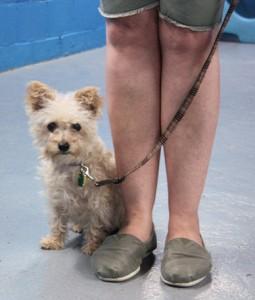 Dog Sense Daycare - Training